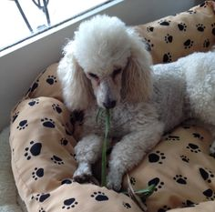 Vanilla Rose and the leaf she found.
