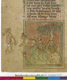 bestiaire divin Guillaume le Clerc Normandie récolte de la mandragore par chien 1265-70