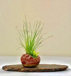 Fiber Optic grass in a 3 inch pot.