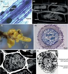 Mycorrhizal ecology and evolution: the past, the present, and the future