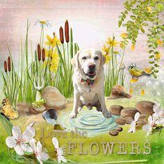 meadow of flowers by k designs