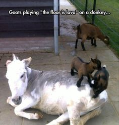 Funny pictures about Everyone Likes The Floor Is Lava. Oh, and cool pics about Everyone Likes The Floor Is Lava. Also, Everyone Likes The Floor Is Lava photos. Funny Animal Pictures, Cute Funny Animals, Funny Cute, Best Funny Pictures, Cute Pictures, Animal Pics, Super Funny, Funny Pics, Hilarious