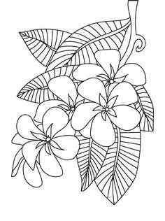 Frangipani coloring page