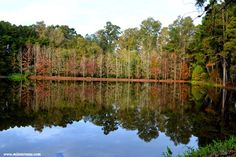 Parque Witeck -Uma das mais belas reservas botânicas do Sul do Brasil