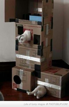 Funny pictures about Cat playing Portal. Oh, and cool pics about Cat playing Portal. Also, Cat playing Portal photos. Diy Cat Toys, Pet Toys, Cool Cats, Diy Jouet Pour Chat, Cat Playhouse, Gatos Cool, Cat Towers, Cat Enclosure, Cat Room