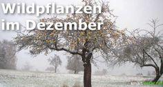 Schmackhaftes aus Feld und Flur: Wildpflanzen im Dezember - smarticular.net