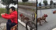 Dono Usa Galinha Para Motivar Cão a Puxar a Sua Carroça