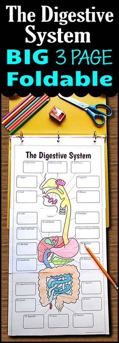 Teach the digestive system using this very large 3 page digestive system foldable that can be used in an INB or binder.  Students will love the space they have to color as well as record all their descriptions.  5 different options are provided for differentiation.  Use it as a lesson that can then be used as a graphic organizer for review.