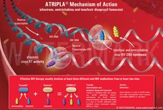 Atripla is a combination therapy that targets reverse transcriptase and stops HIV DNA synthesis.