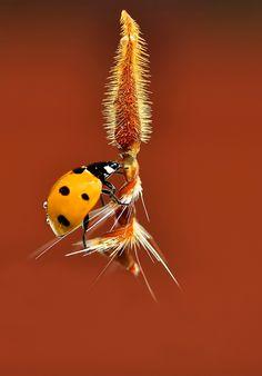 Fly away, ladybug!