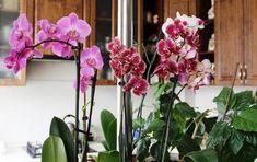 LepšíJá.cz - Zahradníci doporučují: Tato jediná látka stačí, aby vám orchideje kvetly jako šílené Floral Wreath, Home And Garden, Wreaths, Beauty, Decor, Tatoo, Plant, Beleza, Decoration