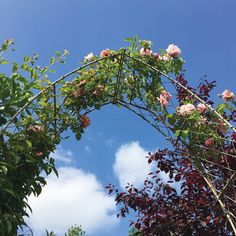 Garden Requisites' steel galvanized Gothic Garden Arch which lends itself perfectly to a gently climbing rose. With diamond pattern trellis. This arch is painted in a Light Bark finish. Contact us on 01225 851577 for further information. Over Door Canopy, Door Canopy Porch, Porch Awning, Porch Doors, Front Porch, Door Canopy Designs, Gothic Garden, Garden Arches, Metal Planters