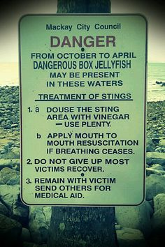 Do not give up most victims recover. Swimming here isn't for sissies. Vinegar Uses, City Council, Water Treatment, Queensland Australia, Don't Give Up, Swimming, How To Apply, Map, Places