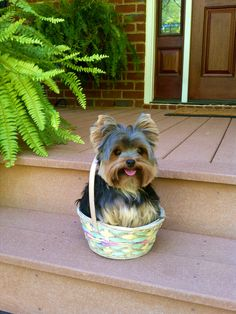 Basket-O-Puppy