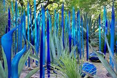 Dale Chihuly glass art exhibit.