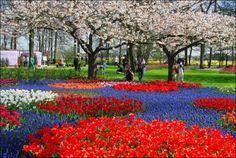 Campo de tulipanes 2