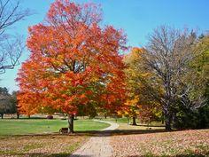 Bird Park, Walpole MA: http://visitingnewengland.com/blog-cheap-travel/?p=1867 #fallfoliage #fallcolors #birdpark