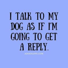 All the time and I do get replies just a Dolittle. Been talking to the animals - Funny Dog Quotes - The post All the time and I do get replies just a Dolittle. Been talking to the animals appeared first on Gag Dad. I Love Dogs, Puppy Love, Cute Dogs, Dog Quotes Funny, Funny Dogs, Dog Sayings, Humor Grafico, Animal Quotes, Dogs And Puppies