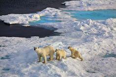 Spitzbergen: Arktische Inselwelt – Sepp Friedhuber / Reisestudio Ikarus Sa, 11. Nov., 12:15 - 12:45   Weltweit.Reisen Polar Bear, Adventure, Animals, Tour Operator, Island, World, Travel, Animales, Animaux