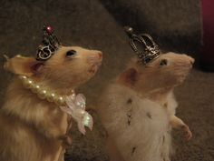 Taxidermy chess: When you play chess with taxidermied mice, all eyes are on you.