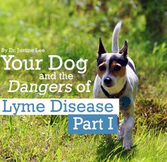 Your Dog and the DANGERS of Lyme Disease - Part I