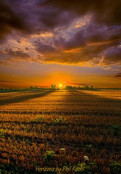 ~~Good Morning ~ Horizon series, morning field golden sunrise, Wisconsin by Phil Koch~~