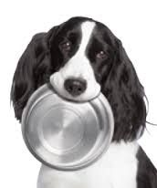 Dog Supplies: We go about our lives believing that simply feeding them any old dog food and providing a cozy place for them to sleep or spread themselves on any old dog bed is good enough for our family dogs. Well we could be entirely wrong as the family dog is a very  loyal and deserves our best selection of Dog Supplies. DogSiteWorld.com - DogSiteWorldStore