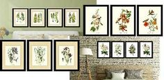 We offer hundreds of beautifully coordinated vintage botanical prints, audubon bird prints, fish and shellfish art, note cards and nature posters. Choose from standard print sizes, multiple frames and mat options. Home Deco Furniture, Audubon Birds, Nature Posters, Vintage Botanical Prints, Bird Prints, Bird Art, Note Cards, Decor Styles, Interior Decorating
