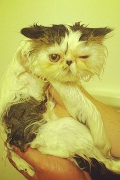 The Dodo - Cats Who Hate Baths
