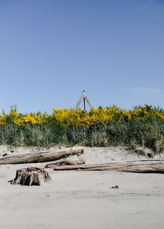 The colours of Sidney Spit.