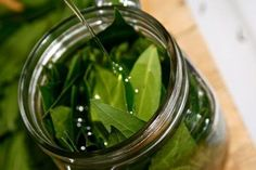 Bay essential oil is extracted from steam distillation of bay leaf. Bay essential oil odor is sweet, spicy and flowery. Bay Leaf Benefits, Oil Benefits, Health Benefits, Herbal Remedies, Home Remedies, Natural Remedies, Infused Oils, Herbal Medicine, Natural Medicine