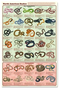 Snake Bite First Aid Poster | North American Snakes Poster