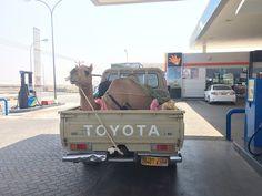 """Camel on the Go"": Desert Safari / Wahiba Sands (Oman 2015)"