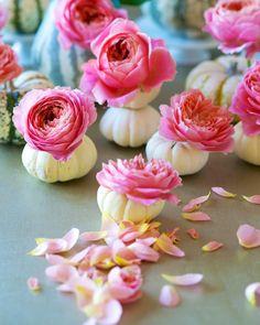 Unique Vessels: DIY | Roses in Pumpkins | Tulipina.com