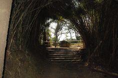 Bambus Tunnel auf dem Weg zur Pagode.