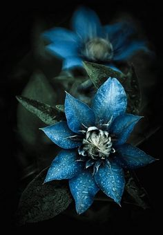 Blue Flower Inspiration