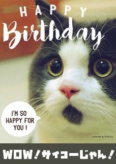 最高の気持ちを伝えるお誕生日ウケる画像 Birthday Messages, Birthday Greetings, Birthday Wishes, Birthday Cards, Wish Quotes, Cute Quotes, I Love Cats, Cute Cats, Happy Birthday Animals