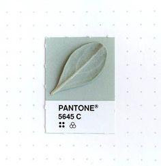 """坂井直樹の""""デザインの深読み"""": デザイナーのインカ・マシューはtumblrで,オブジェクトの持つ色(アナログデータ)とパントンの色(デジタルデータ)をマッチングしてきた。"""