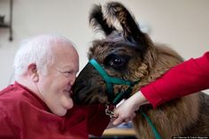Therapy Llamas and Elderly Patients | ExposureGuide.com