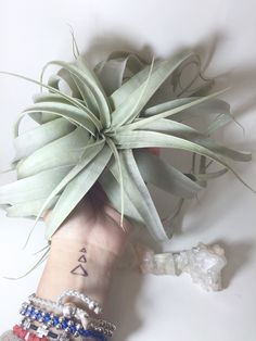 A personal favorite from my Etsy shop https://www.etsy.com/listing/211624888/xerographica-air-plant-tillandsia-head