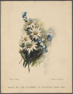 White flowers and blue forget-me-nots. Hotel menu. More