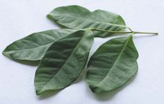 Cara membuat obat asam urat dari daun salam