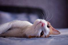 #Cute #Cat #Kitten #Bed #Photography