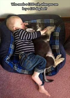 Crib = $200 dogbed = $20 Love = priceless