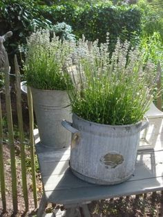 INSPIRATION: lavender in galvanized buckets