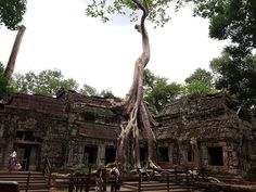 Ta Prohm the famous Tomb Raider temple. Our private guide knew just the right time to visit it for the lowest crowds! Ta Prohm, Cambodia Travel, Paris Skyline, Temple, Tower, Lathe, Temples