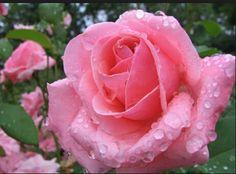 Belleza en rosa