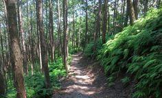 Dite addio allo stress e innalzate il vostro sistema immunitario basso con delle piacevoli e rilassanti passeggiate nel bosco.  Certamente questo non eliminerà completamente le tensioni e il nervosismo quotidiano. Avrete almeno una buona boccata d'ossigeno che vi farà sentire meglio e più in forma.
