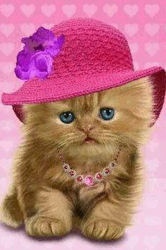 Persian Cat For Sale Kitten Kitten Images, Puppy Images, Kittens Cutest, Cats And Kittens, Cute Cats, Animals And Pets, Baby Animals, Cute Animals, Pretty Cats