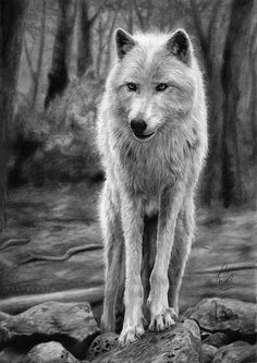 Wolf drawing art PRINT of traditional art wild white wolf in forest pencil drawing GICLEE PRINT hyperrealist wolf poster wolf decoration by DrawingIllustration